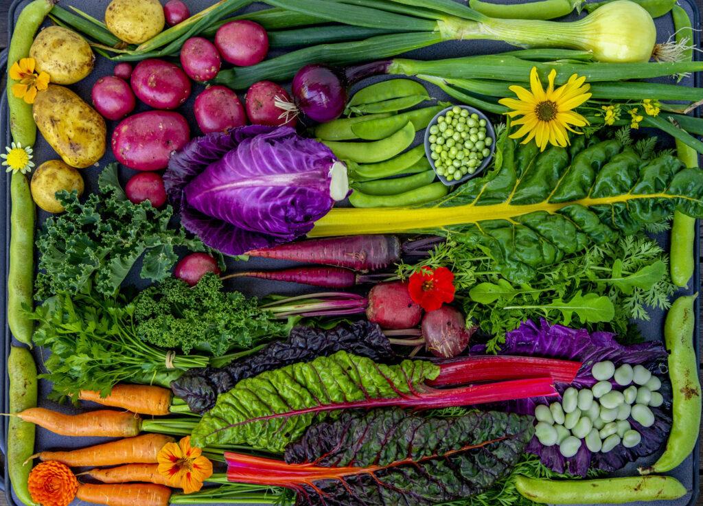 grønnsaker fra Bakken Andelsgard